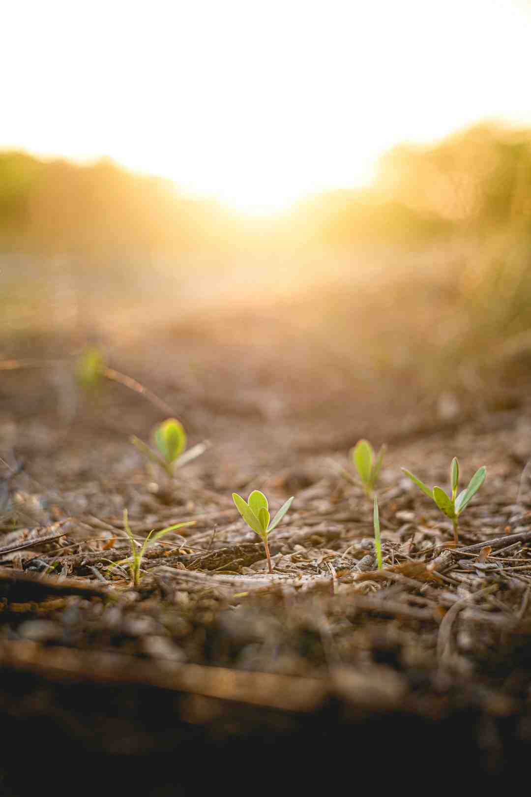 Comment isoler le sol