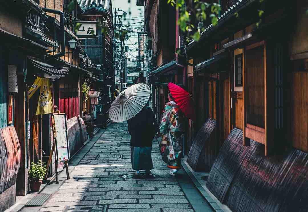 Erable du japon croissance